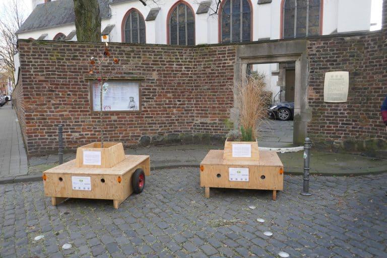 Neuer Standort für die kommenden Wochen in der Kartäusergasse - Kirchenasyl für die Wanderbaumallee bei der Ev. Kartäuserkirche.