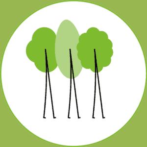 Initiative Wanderbaumallee