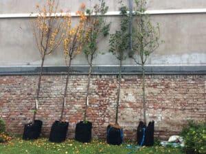 Bäume & Module der wba