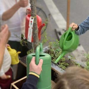 Gießen und Pflege der Wanderbäume