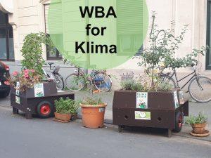Die aktivsten Bäume im Klimastreik